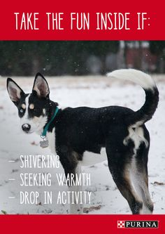 Look for these signs to know that outdoor playtime needs to come inside during winter. #dog #petcare