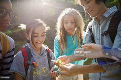 Stock Photo : Teacher and children examining plant in woods