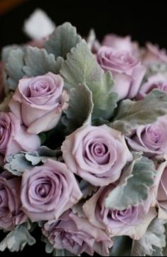 Dusty Miller and Sterling Roses.both of these are in my bouquet! Red Rose Bouquet, Rose Wedding Bouquet, Wedding Flowers, Dusty Miller, Love Rose, Pretty Flowers, Purple Flowers, Red Roses, Black Roses
