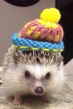 Little hedgehog with a fuzzy hat
