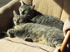 my cats, my loves(: