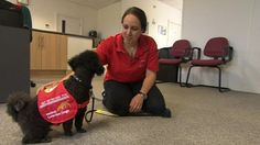 Dog trained to detect nuts changes life of allergy sufferer
