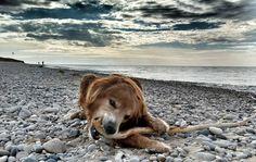 Ace the wonder #dog #wombatsdoamerica