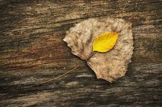 """""""Two Leaves"""" by Scott Norris"""