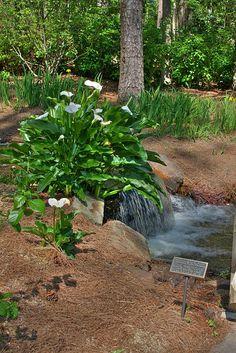 Botanical Gardens, Birmingham, Alabama
