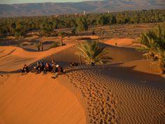 Palmeraie #Maroc #desert