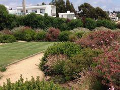 Taibi Addi Costa, Sidewalk, Chile, Plants, Ideas, Gardens, Landscaping, Chili, Sidewalks