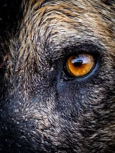 A close up of an African wild dog (Lycaon pictus) in Vumbura Plains, Okavango Delta, Botswana © Nick Leuenberger Kruger National Park, National Parks, African Wild Dog, Mountain Gorilla, Okavango Delta, Male Lion, Baboon, Game Reserve, Wild Dogs