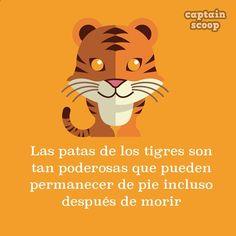 animales04tigre