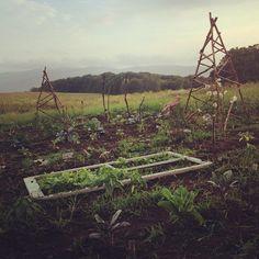 .@Rosie HW LAPORTE | The garden begins to grow despite all the rain. The hill vt