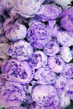 Purple peonies...