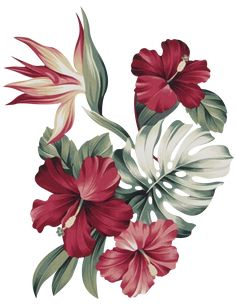 Hd Flowers, Botanical Flowers, Flowers Nature, Tropical Flowers, Botanical Prints, Flower Art Images, Polygon Art, Victorian Flowers, Flower Phone Wallpaper