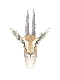 African Gazelle Limited Edition Art Print by Natalie Groves | Minted
