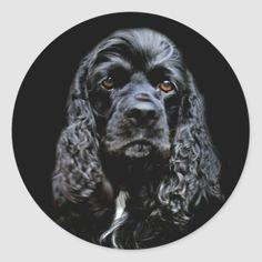 Black Cocker Spaniel Classic Round Sticker   britney spaniel, welsh springer spaniel, crocker spaniel #cockerspanielsofig #cockerspanielofig #cockerspanielpics, back to school, aesthetic wallpaper, y2k fashion Black Cocker Spaniel Puppies, Welsh Springer Spaniel, Round Stickers, Custom Stickers, Aesthetic Wallpapers, Dog Lovers, Pets, Classic, Make Your Own