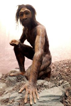 Homo erectus at the American Museum of Natural History. Photo by Mireia Querol Rovira