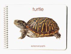 Turtle: External Parts Book (External Anatomy « Pet Lovers Ads