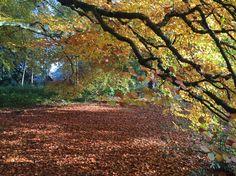 Autumn walk in Clumber Park, Nottinghamshire