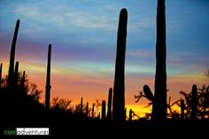 Sonoran Desert sunrise, JW Marriott Starr Pass, Tucson, Arizona
