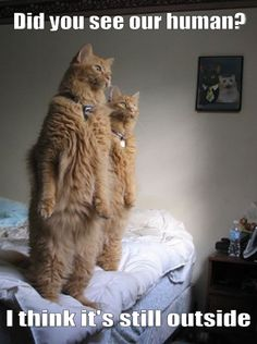 my cat does this when he's checking things out before acting...kinda weird to see. lol