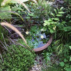 kotomouさんの、睡蓮,睡蓮鉢,植物のある暮らし,ビオトープ,Entrance,のお部屋写真