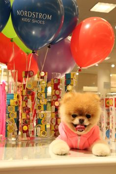 Precious puppies  Nordstrom... what more could a girl want?