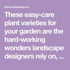 These easy-care plant varieties for your garden are the hard-working wonders landscape designers rely on, year after year, including affordable annuals, perennials, shrubs, and trees.