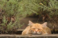 Squishy Cat