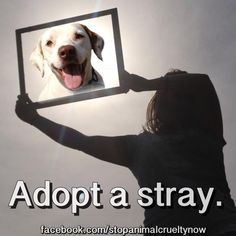 No question about it, it is best to adopt. Animal Testing, Animal Rescue, Animal Shelters, Animal Posters, Dogs Of The World, Anarchy, Bobby, Dog Cat, Adoption