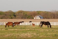 HorseCity.com - The Real Cost of Horse Ownership