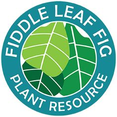 The Fiddle Leaf Fig Plant Resource