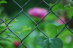 Spring | OKC