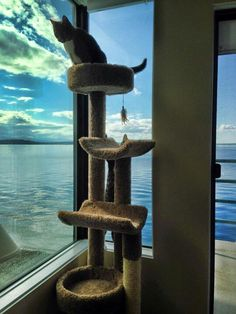 Cat tree with a view, Seattle