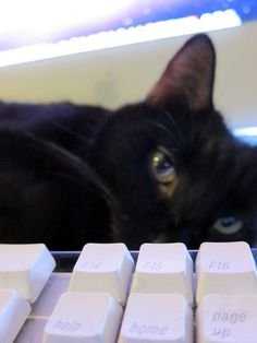 How to Make A Cat Using Your Keyboard