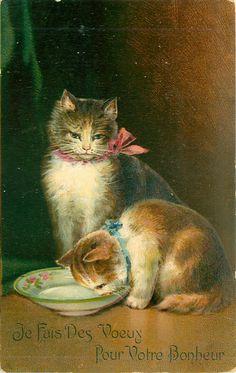 JE FAIS DES VOEX POUR VOTRE BONHEUR two cats, one licks at empty bowl, cat behind observes