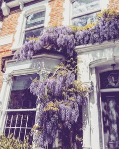 🌸 London blossoms 🌸 North London area / Archway