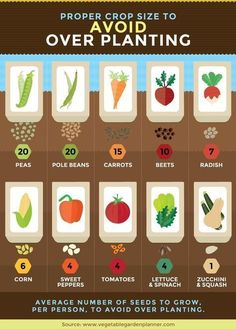 Organic gardening tip. Do you enjoy developing your very own natural veggie garden? Here are several eco-friendly gardening tips which will assist you in the best direction. Veg Garden, Garden Types, Edible Garden, Easy Garden, Garden Plants, Planting A Garden, Vegtable Garden Layout, Beginner Vegetable Garden, Veggie Gardens