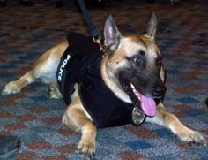Vested Interest in K-9s, Inc. provides protective vests for police dogs across the nation.