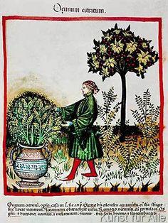 14. Jahrhundert - Hausbuch d. Cerruti / Basilicum (53,0 x 71,0 cm)