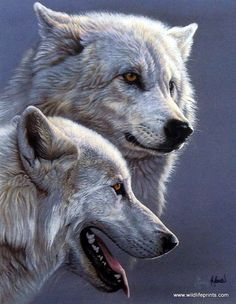 In the print ARCTIC WOLVES Al Agnew creates very realistic image of a pair of majestic Arctic wolves. Each Arctic wolf is beautiful in its own right, and when combined as a pair, they make a profound