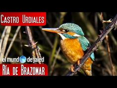 Castro Urdiales | Aves en la Ría de Brazomar - YouTube