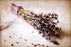 flower lavender photo print - whimsical fine art stilllife photography, wall art, vintage, postcard, pretty