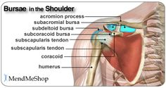 Shoulder Burisits - Bursae anatomy of the shoulder. Bursae (plural for bursa) are flattened fluid-filled sacs that function as cushions between your bones and the muscles (deep bursae) or bones and tendons (superficial bursae).