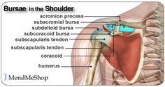 Shoulder Burisits - Bursae anatomy of the shoulder. Bursae (plural for bursa) are flattened fluid-filled sacs that function as cushions between your bones and the muscles (deep bursae) or bones and tendons (superficial bursae).