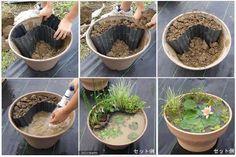 Idea notable para plantas acuaticas