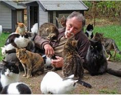 A man and his cute cats - Imgend