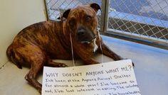 Опечаленным Укрытие Собака прекращает есть, потому что никто не хочет,