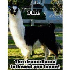 O, no!  The drama llama followed you home!