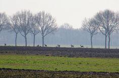 Onlanden in de mist, Kop van Drenthe.