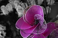 This is a fake flower in front of real ones. I took the original in my friends flower shop, then edited using Photoshop. I changed the black-and-white colour balance in the background, but kept the main subject in colour so the focus is on that flower.