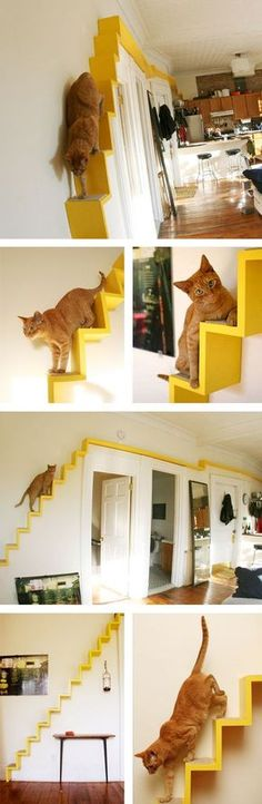 Área de passagem para gatos instalada na parede                                                                                                                                                                                 Mais